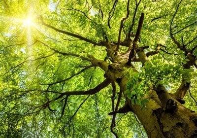 Nachhaltigkeit Anforderung